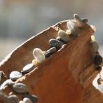 con passione 13, Collier aus Kieselsteinen (2,5 x 1,5 cm) mit Süßwasserperlen, Onyx und Silbersternen, Länge 59 cm, 98,- €